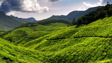 Photo of 5 Must Visit Places In Kerala